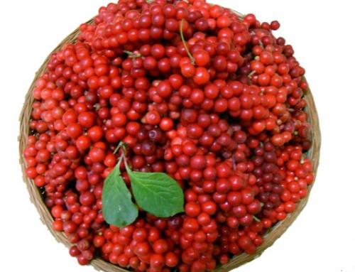Une association remarquable de marc de raisin et de fruit d'omija